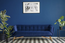 Luxurious Dark Blue Plush Couch Surrounded By Green Plants Standing On A Chessboard Floor In A Living Room Interior. Framed Poster Hanging On A Dark Wall. Real Photo.
