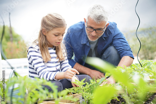 Papiers peints Echelle de hauteur Father and daughter gardening together, home vegetable garden