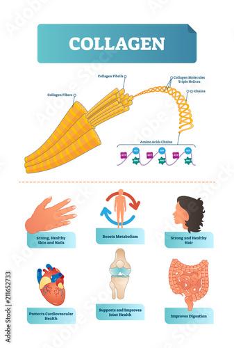 Vector illustration about collagen Canvas Print