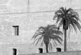 Palme Schatten Wand - 211655352