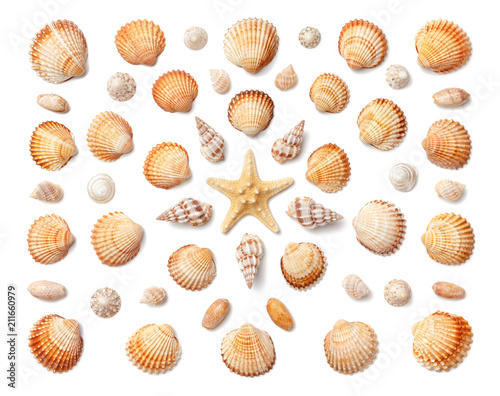 Obraz na plátně  Pattern of exotic sea shells and starfish isolated on white background