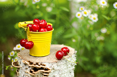red ripe cherry on a background