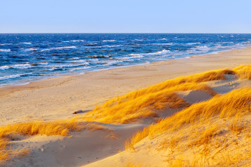 Fototapeta Morze Sunny autumn day on the Baltic sea. Sandy beach, dunes and yellow grass.