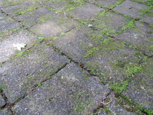 Old Stone Tiles With Weeds And...