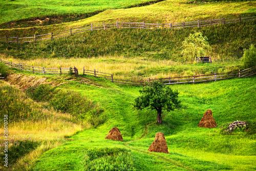 In de dag Lime groen Green summer landscape scenic rural view.