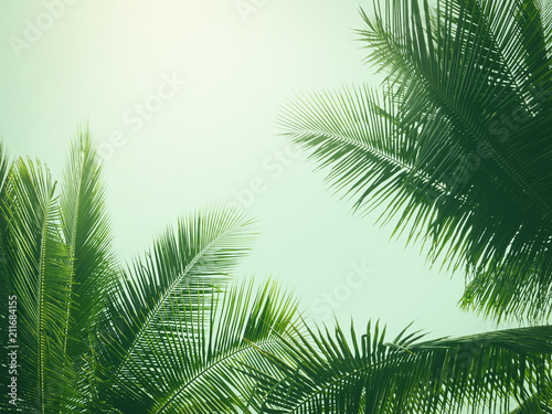 Tuinposter Palm boom coconut palm tree in vintage style