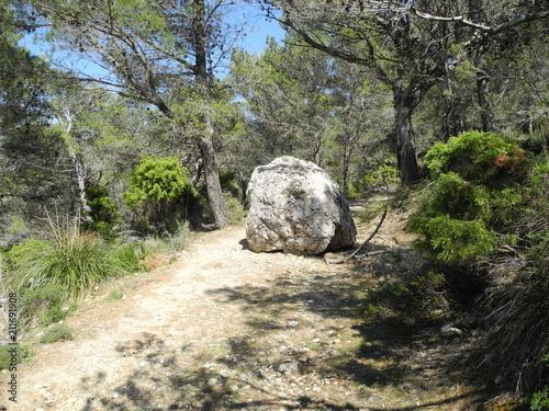 Fotografie, Obraz Wegsperre - Felsbrocken versperrt einen Waldweg