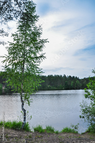 Foto op Plexiglas Blauwe hemel Forest lake landscape with young birch on the shore