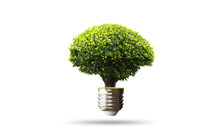 Green Tree Growing Out Of Bulb Isolated On White Background With Clipping Path. - Eco Friendly Concept.