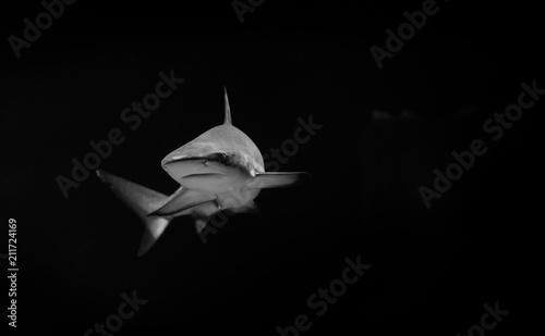 Fotomural White shark in the dark