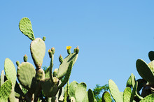 Cactus And The Blue Sky