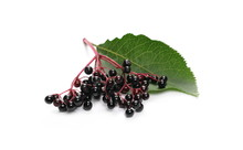 Elderberries With Twig And Leaf Isolated On White Background, (Sambucus Nigra)