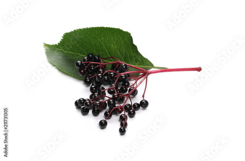Elderberries with twig and leaf isolated on white background, (Sambucus nigra)