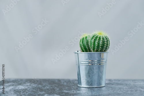 Foto op Canvas Cactus Houseplant, cactus, echinopsis in a metal flowerpot on gray table, horizontal