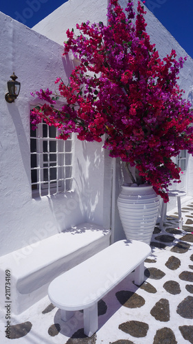 Photo of beautiful bougainvillea flower in blossom with awesome colours in picturesque Greek island with deep blue waves, Naousa, Paros island, Cyclades, Greece