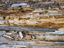 Rotten Wood Close Up And Its Rotten Splinters