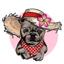 Vector Portrait Of French Bulldog Dog Wearing Straw Hat, Flower And Polka Dot Bandana. Summer Fashion Illustration. Hand Drawn Pet Portait. Poster, T-shirt Print, Holiday, Postcard, Summertime.