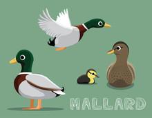 Mallard Cartoon Vector Illustr...