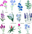 Wildflowers on a white background. Chicory, Lily of the valley, lavender.