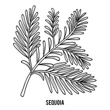 Coloring Book, Sequoia Branch