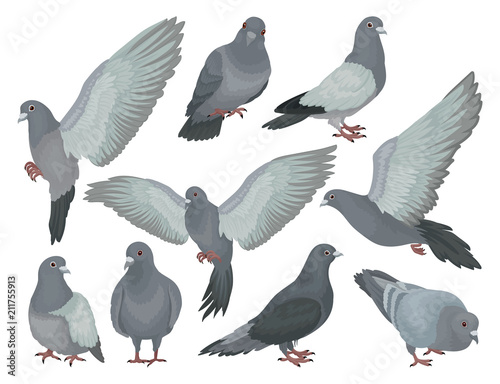 Grey pigeons set, doves in different poses vector Illustrations on a white background Wall mural