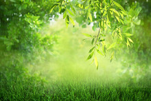 Natural Green Defocused Spring Summer Blurred Background With Sunshine. Juicy Young Grass And Foliage On Nature In Rays Of Sunlight, Scenic Framing, Copy Space.