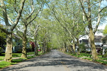 Nice Suburban Alley Or Mall, L...