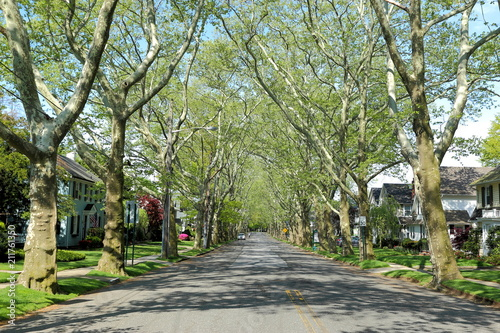 Nice suburban alley or mall, lined with shade trees,Bellerose is a middle class neighborhood on the eastern edge of the New York City borough of Queens, along the border of Queens and Nassau County Wallpaper Mural