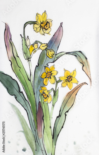 Yellow Flower Narcissus Buy This Stock Illustration And Explore