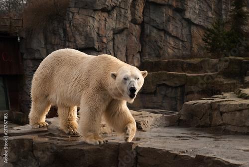 Fotografía Ice bear