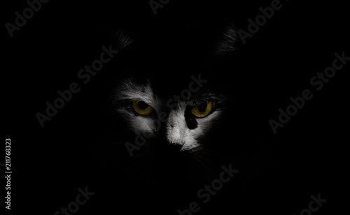 Fototapeta  In complete darkness cat's face with yellow eyes