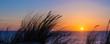 Leinwandbild Motiv Sunset on atlantic ocean, beach grass silhouette in Lacanau France