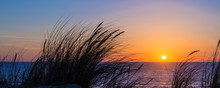 Sunset On Atlantic Ocean, Beach Grass Silhouette In Lacanau France