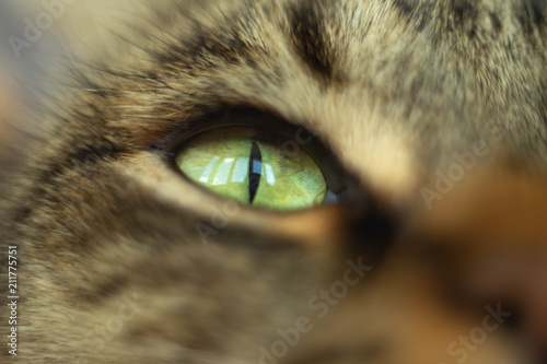Canvas Prints Panther eye