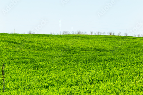 Spoed Foto op Canvas Wit beautiful Green field