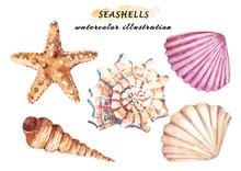 Watercolor Set Of Underwater L...