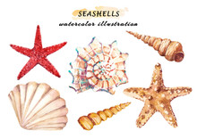Watercolor Set Of Underwater Life Objects - Various Tropical Seashells And Starfish. Hand Drawn Illustrations Isolated On White Background.