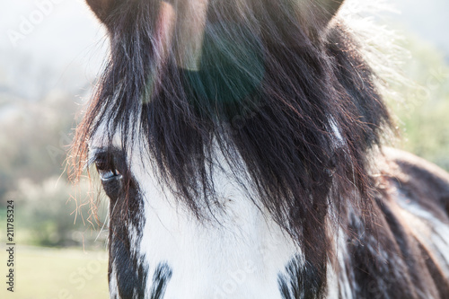 Bi-Coloured Blue Eyes Horse on a Sunny Summer Day with Chromatic Aberration Canvas Print