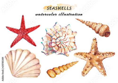 Photo Watercolor set of underwater life objects - various tropical seashells and starfish