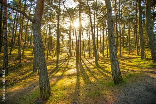 Fotografia, Obraz  forest in back light