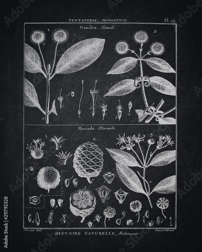 Vintage Printable Black And White Wall Art
