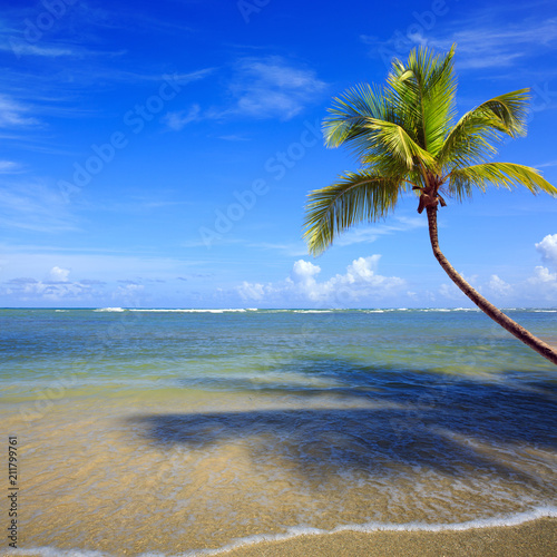 Tuinposter Centraal-Amerika Landen Palm tree branch on tropical beach.