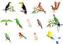 Set Of Tropical Exotic Birds, Toucan, Horned Crows, Goatin, Parrots, Isolated Vector Illustration