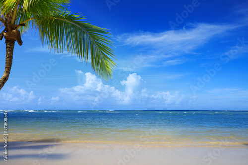 Staande foto Centraal-Amerika Landen Palm tree on white tropical beach. Travel background.