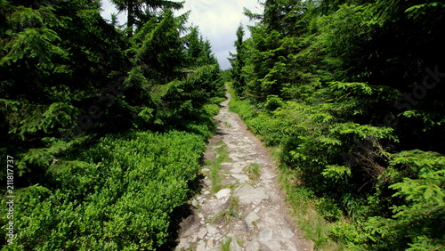 Foto op Canvas Weg in bos Tajemnicza ścieżka prowadząca przez zielony las