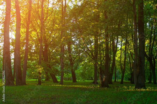 Papiers peints Forets Summer landscape, summer park in sunny weather at sunset