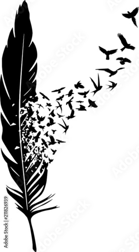 Piórko z stadem ptaków
