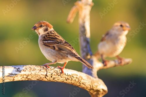 Fototapeta premium wild birds on a beautiful branch
