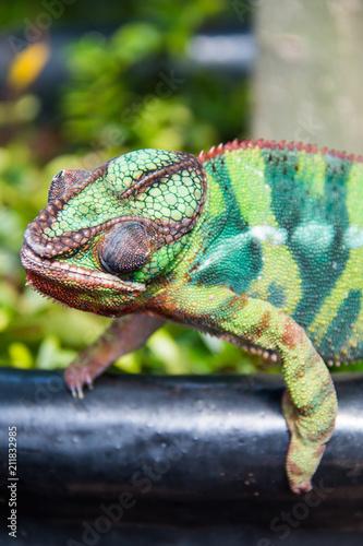 Staande foto Kameleon flora and fauna in vertical indoor reainforest