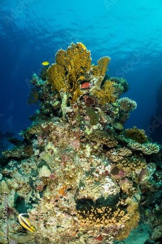 Staande foto Koraalriffen Coral garden in the red sea